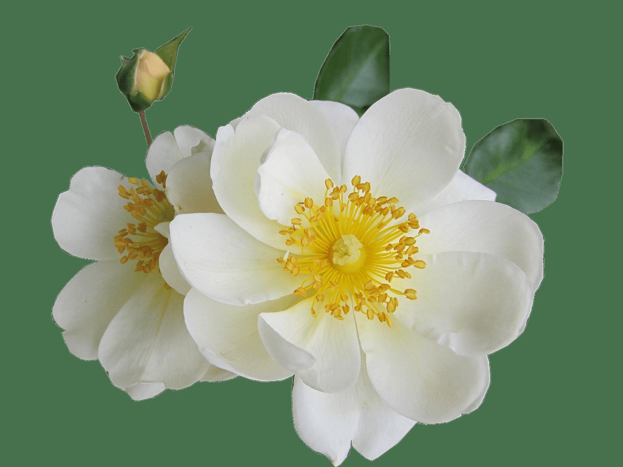 rose - Sonstige Anlässe